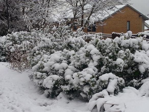 20130121_091412 snow2